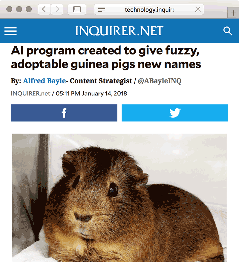 'AI program created to give fuzzy, adoptable guinea pigs new names'